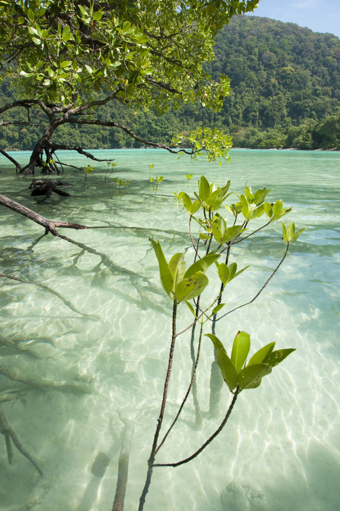 I love this crystal clear water