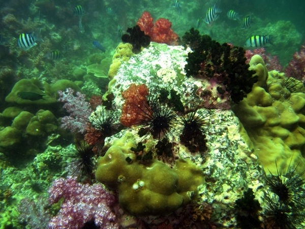 Marine life in Lipe island is in very good condition.