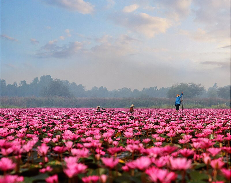 The lake of red water lilies one of the worlds strangest lakes pink lotus sea mightylinksfo