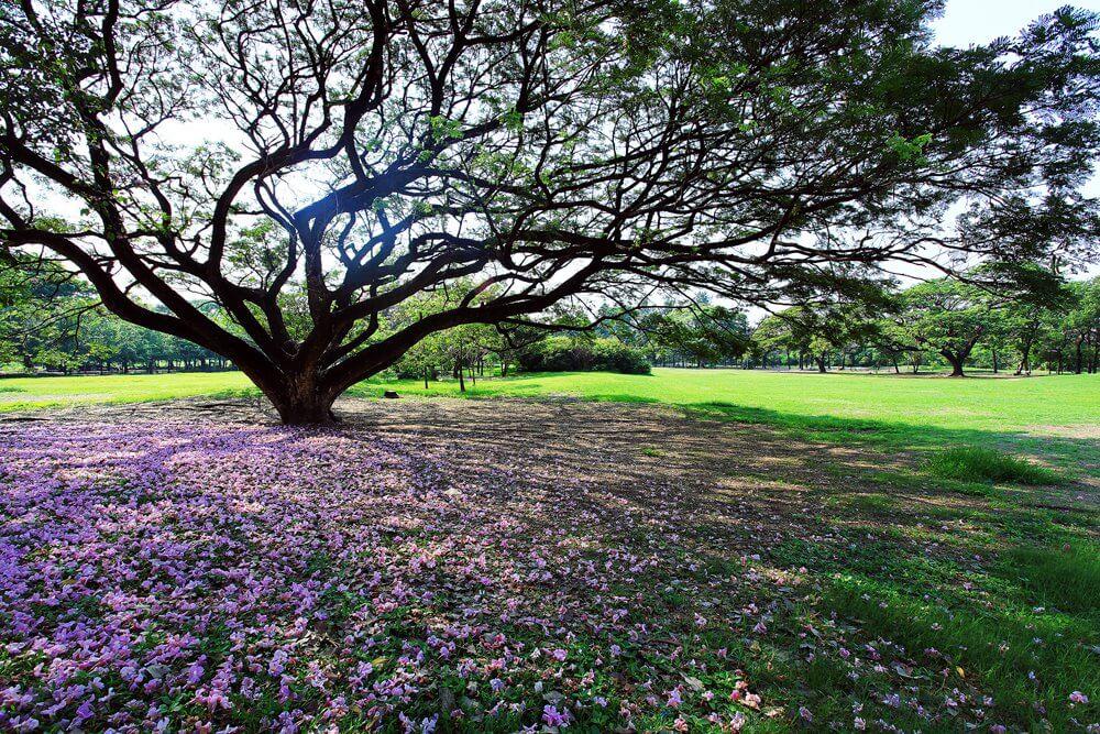 Rotfai park